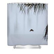 Scrub Jay In-flight Shower Curtain