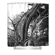 Sculpted Cypress Shower Curtain