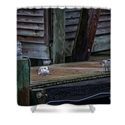 Sea Birds Dockside Shower Curtain