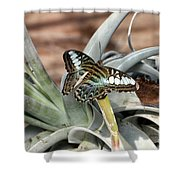 Sea Blue Butterfly Two Shower Curtain