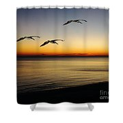 Sea Cruisers Shower Curtain