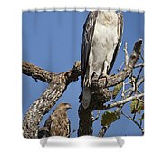 Sea Eagle And Brown Kite Sharing A Tree Shower Curtain