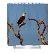 Sea-eagle And The Peewee Shower Curtain