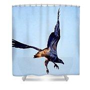 Sea Eagle Flight Shower Curtain