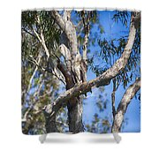 Sea Eagle Vantage Point Shower Curtain
