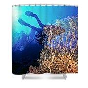 Sea Fans 2 Shower Curtain