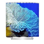 Sea Fans 7 Shower Curtain