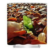 Sea Glass And Shells 16 10/2 Shower Curtain