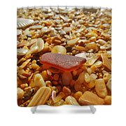 Sea Glass And Shells 3 10/13 Shower Curtain