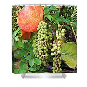 Sea Grapes And Poison Ivy Shower Curtain