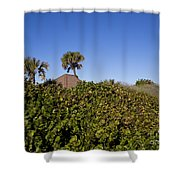 Sea Grapes On A Florida Sand Dune Shower Curtain