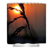 Sea Grass In The Sun Shower Curtain