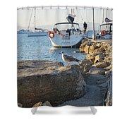 Sea Gull 1 Shower Curtain