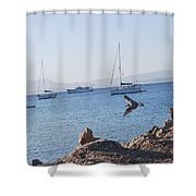 Sea Gull 2 Shower Curtain