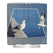 Sea Gull Away Out Of Bounds Shower Curtain