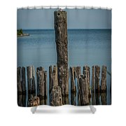 Sea Gull On A Piling Shower Curtain