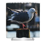 Sea Gull On Break Shower Curtain