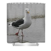 Sea Gull On The Beach At Oceanside California Shower Curtain