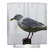 Sea Gull On The Dock On A Foggy Day Shower Curtain
