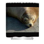 Sea Lion-00178 Shower Curtain