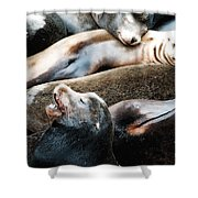 Sea Lion Dreams Shower Curtain