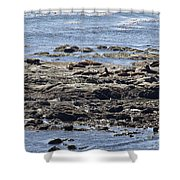 Sea Lion Resort Shower Curtain