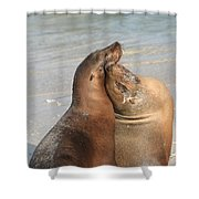 Sea Lions In Love Shower Curtain