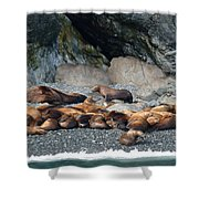 Sea Lions On The Sea Shore Shower Curtain