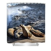 Sea Lions Seek Shelter Shower Curtain