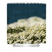 Sea Mayweed And The Sea Shower Curtain