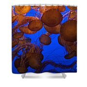 Sea Nettle Jellyfish Shower Curtain