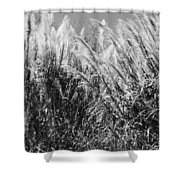 Sea Oats In The Glades Shower Curtain