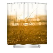 Sea Oats Sunset Shower Curtain by Sebastian Musial