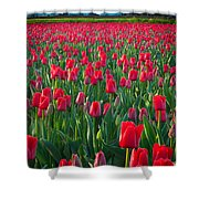 Sea Of Red Tulips Shower Curtain by Inge Johnsson