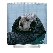 Sea Otter Grooming Shower Curtain