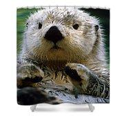 Sea Otter Swimming At Tacoma Zoo Captive Shower Curtain