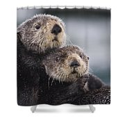 Sea Otters Huddled Together Shower Curtain