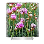 Sea Pinks Shower Curtain