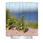 Sea Sandwort Shower Curtain
