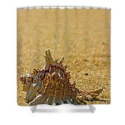 Sea Shell By The Sea Shore Shower Curtain