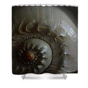 Sea Shell Joy Shower Curtain