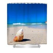 Sea Shell On The Beach Shower Curtain