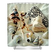 Sea Shells- Colorful Collection Shower Curtain