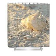 Sea Shells Shower Curtain