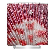 Sea Shells Upclose 1 Shower Curtain