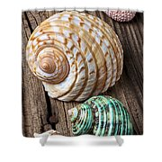 Sea Shells With Urchin  Shower Curtain