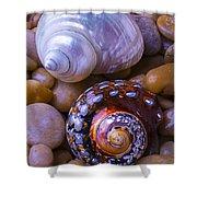 Sea Snail Shells Shower Curtain