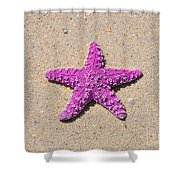 Sea Star - Pink Shower Curtain