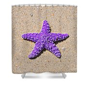 Sea Star - Purple Shower Curtain by Al Powell Photography USA