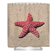 Sea Star - Red Shower Curtain